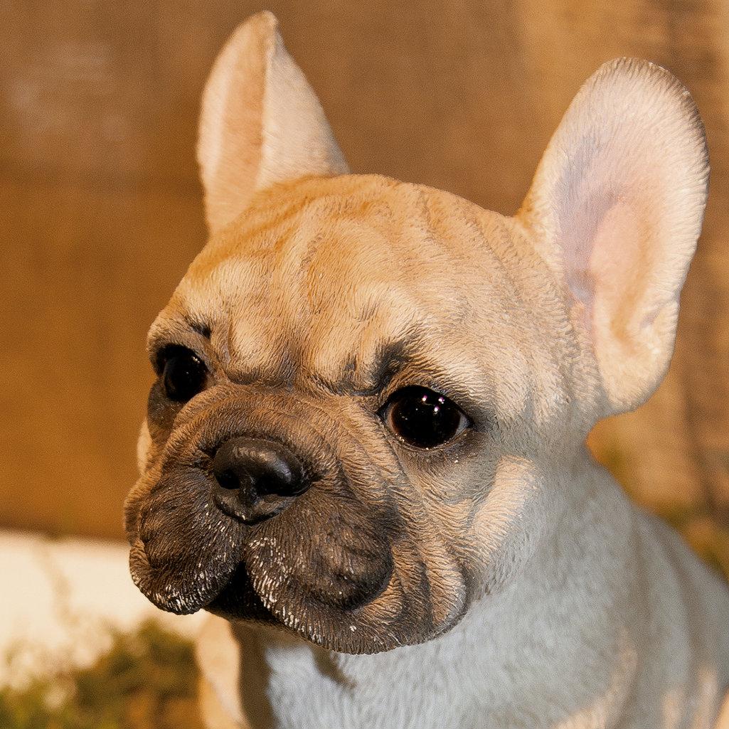 Haustier in Ihrem Ohr DE Foto-Schmuck French Bulldog Ohrringe